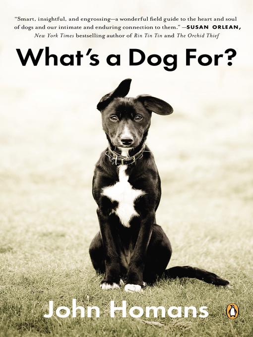 dog man best friend essay